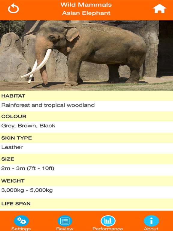 Animals : Wild Mammals Quiz screenshot 8