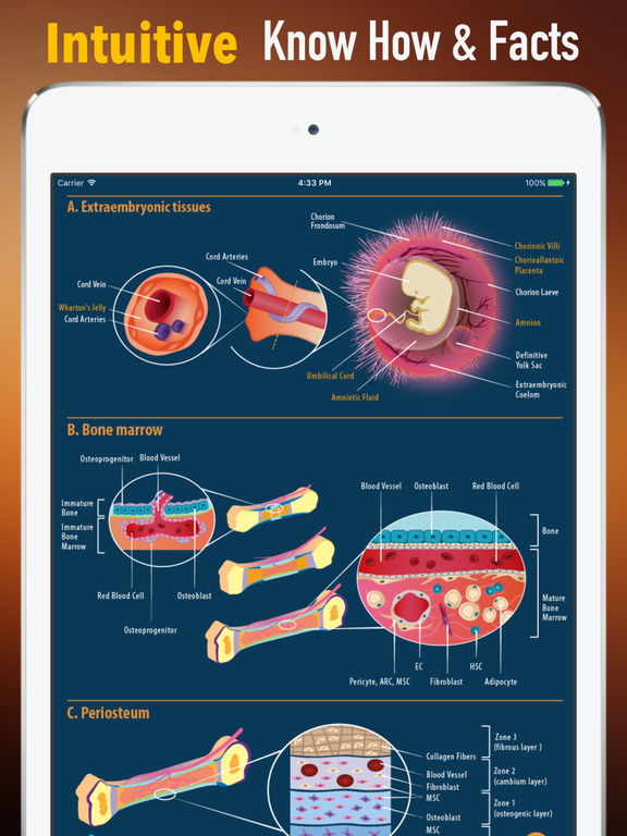 Human Embryology:Basics and News screenshot 7