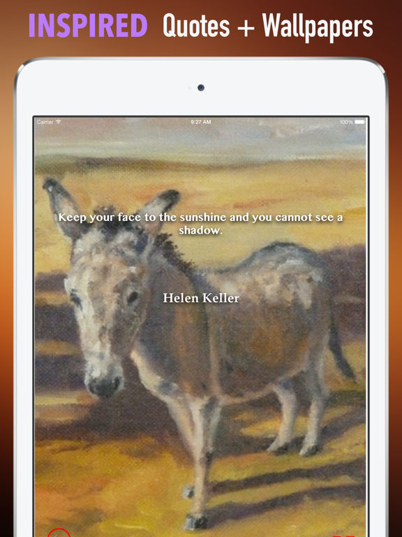 Donkeys Wallpapers HD: Quotes Backgrounds screenshot 10