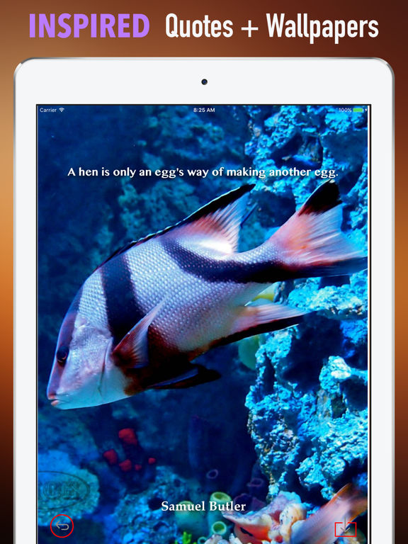 Marine Life Wallpapers HD- Quotes and Art Picture screenshot 10