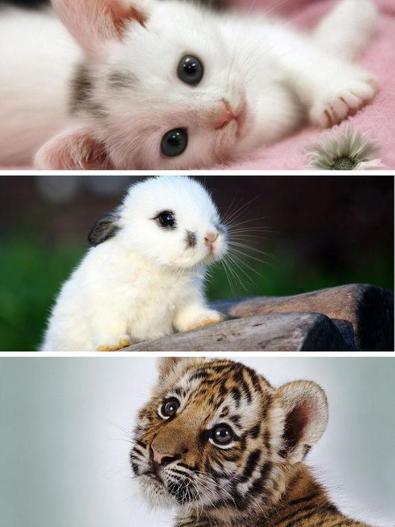 cute baby animals wallpaper