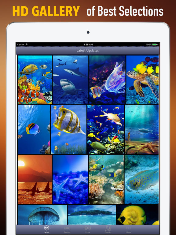 Marine Life Wallpapers HD- Quotes and Art Picture screenshot 6