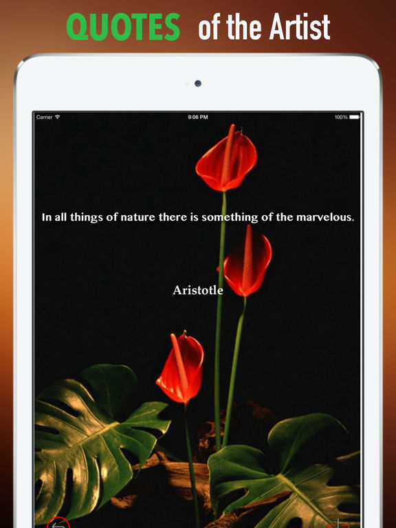 Anthurium Wallpapers HD: Quotes Backgrounds with Art Pictures screenshot 9